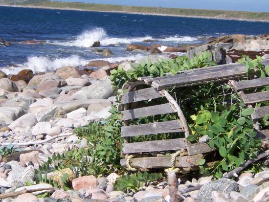 Gros Morne/Norris Point KOA