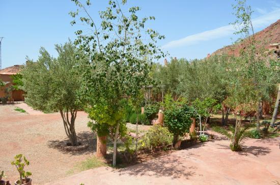 Dar Tougha: jardin