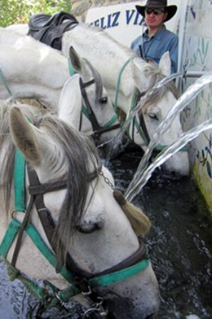 Bubion, Spain: thirsty horses