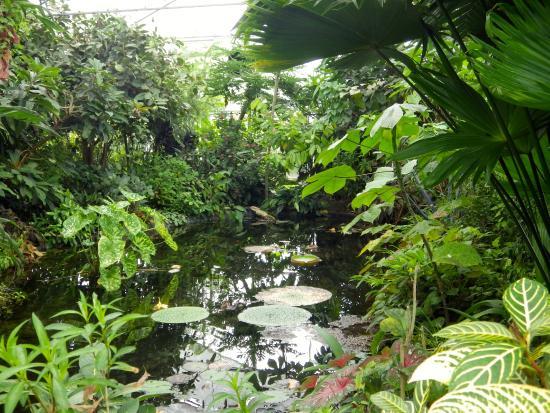 Les Jardins Suspendus: intérieure des serres tropicales
