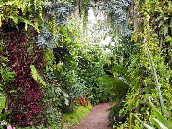 Int rieur des serres tropicales photo de les jardins for Jardins suspendus le havre horaires