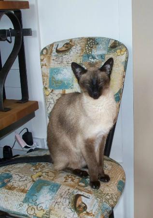 Blanket and Spoon: Feline family