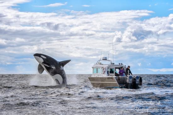 Adventure Quest Tours Canada Inc: Whale Watching Advenure Tours