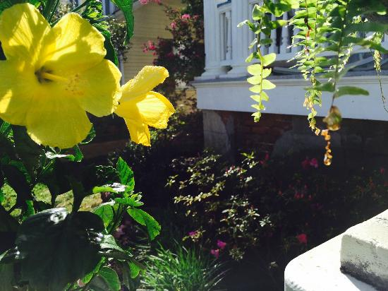 Bisland House Bed and Breakfast: flowers