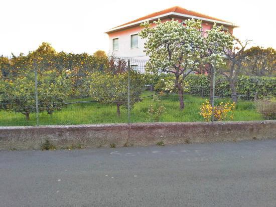 Orchidea: сады лимонов