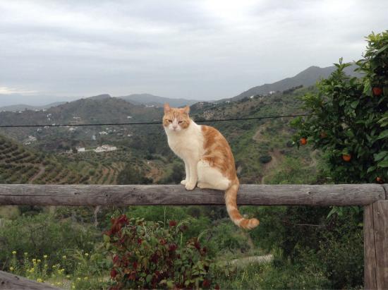 Casa Colina: The beautiful vieuw and the Beautiful cat. The perfect match
