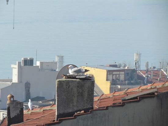 Billede af my home sultanahmet istanbul for Reyyan hotel