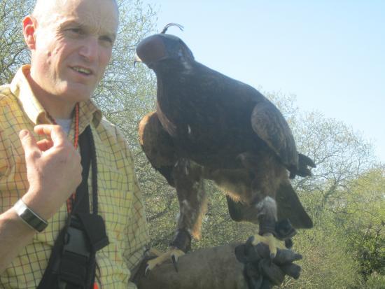 Dartmoor Hawking Falconry Experience: 21 05 2015
