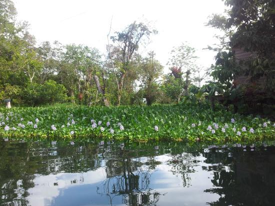 Hotel Kangaroo: mangrovie