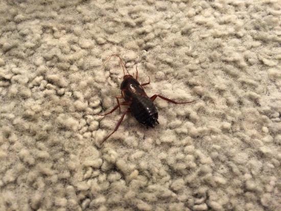 Superior Amargosa Opera House And Hotel: Bug On The Rug
