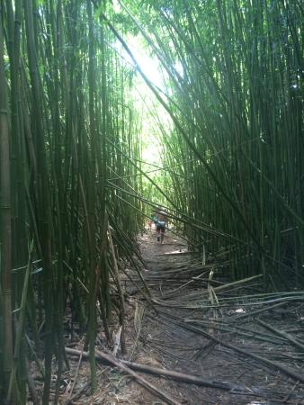 Maui Custom Tours: Bamboo forest