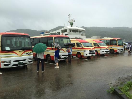 加計呂麻島, 港ではフェリーに合わせてバスが待っています