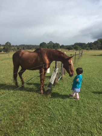 Honeycomb Valley Farmstay: Hollywood the nicest horse