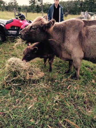 Honeycomb Valley Farmstay : Animal feeding