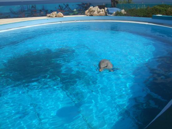 db Seabank Resort + Spa: Dolphin park