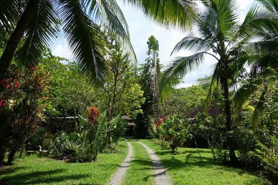 Alby Lodge : Garten