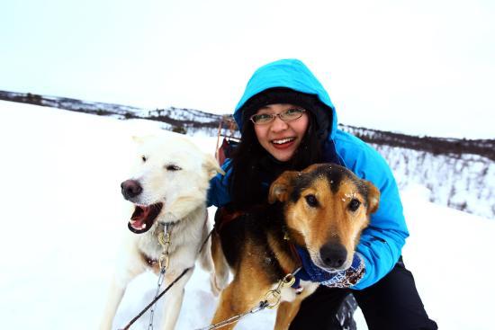 Alaskan Husky Tours Day Tours