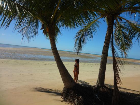 Praia Camacho: Coqueiros