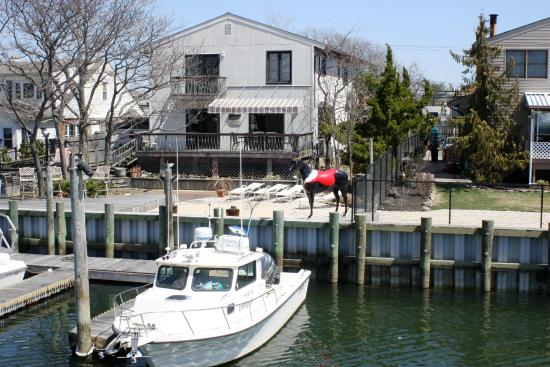 """Freeport's Nautical Mile: A whimsical """"horse"""" by the canal, seen from a boat."""