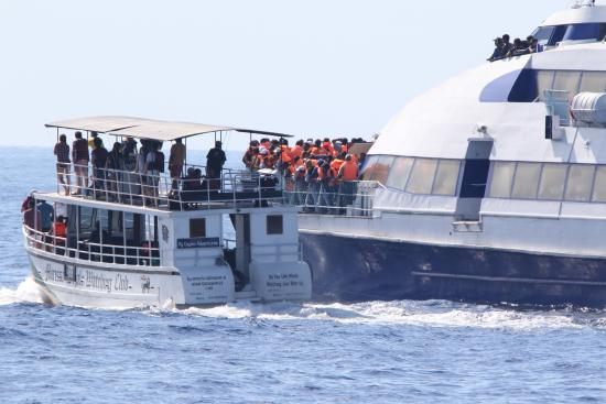 Sri Lanka Navy Whale Watching: Sri Lanka Navy boat almost crashes into another whale watching boat whilst pursuing whales