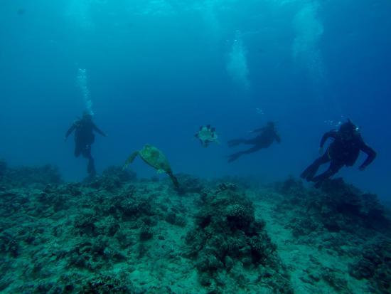 Banzai Divers Hawaii: Turtle Canyons