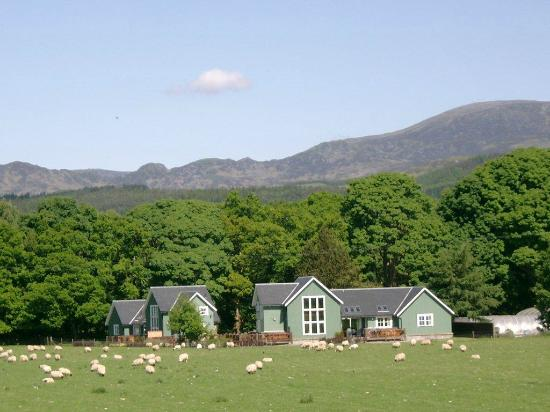 Highland Heather Lodges: View of the lodges