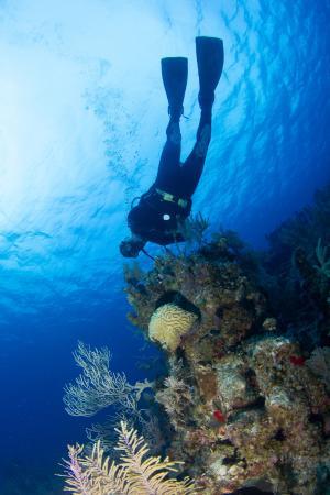 Grand Turk Diving