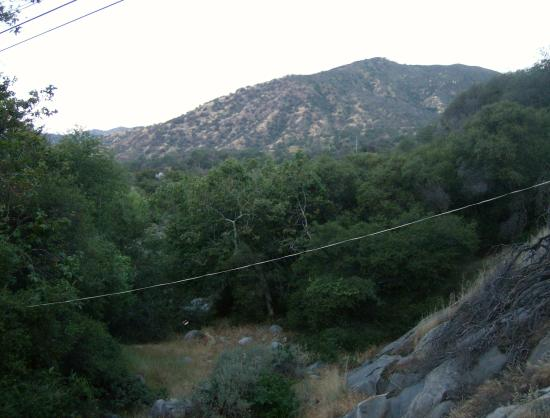 Sequoia Village Inn: View from Deck