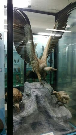 National Museum of Natural History: From inside, rich with the wild life