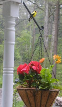 Inn The Glen, Bed & Breakfast: Nature