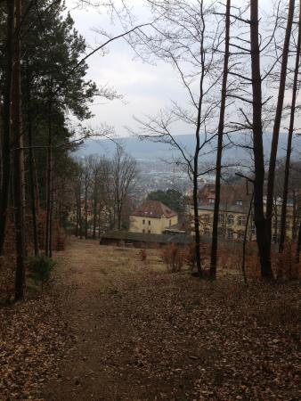 Hotel Franziskushöhe: Beautiful forest and trails behind the Hotel.