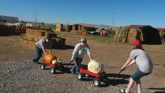Jaker's Pumpkin Patch