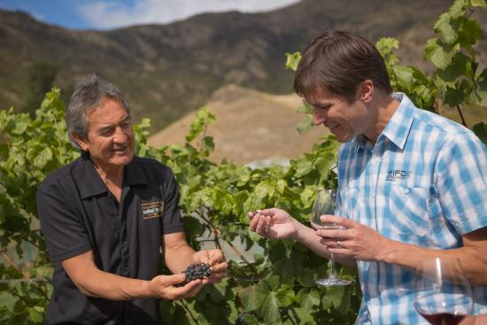 Queenstown Wine Trail: Inspecting the vines at Brennan