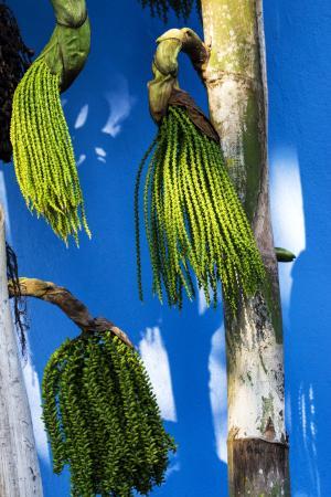 Alajuela, Kostaryka: Xandari Plants 3