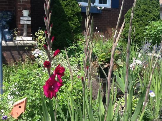Cindy's Bed & Breakfast: Front garden