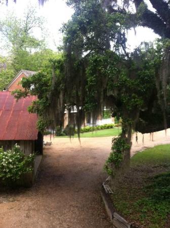 Natchez, MS: Back servant house