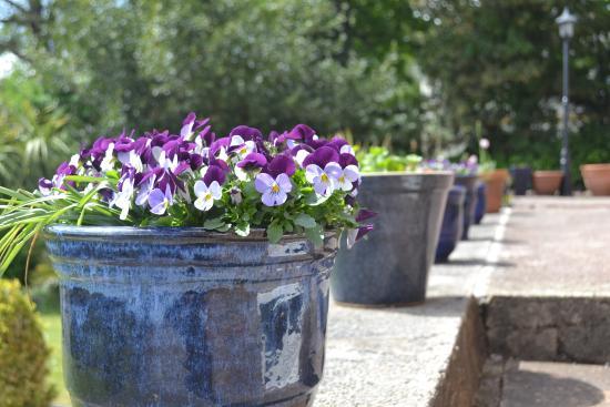 The Redholme: Garden