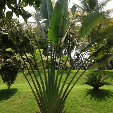 Green Valley Resort : Lush green garden