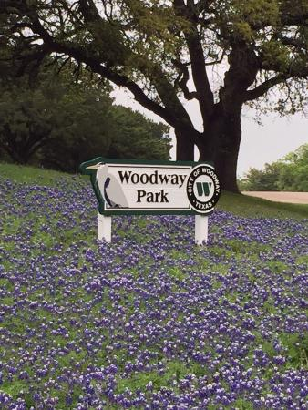 Woodway, Teksas: Blue bonnets in bloom April 2015