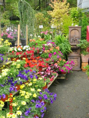 flowers - Picture of Grandfather Mountain Nursery Garden Center ...