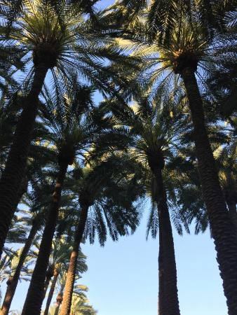 Alto ristorante e bar: Dining on the patio with tall palm trees all around...love it!
