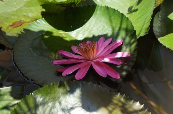 Tranquilou Home Stay: Lotus