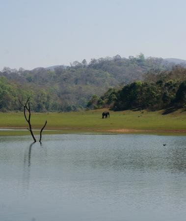 Tranquilou Home Stay : Un éléphant aperçu de loin