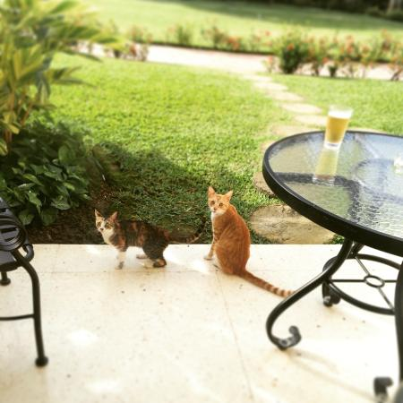 Sandals Montego Bay: kittens on our porch