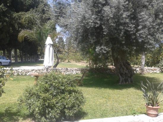 Villa dei Papiri : giardinetto 2