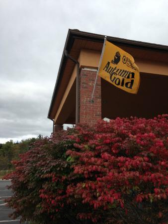 Comfort Inn Ellsworth: Autumn Gold days