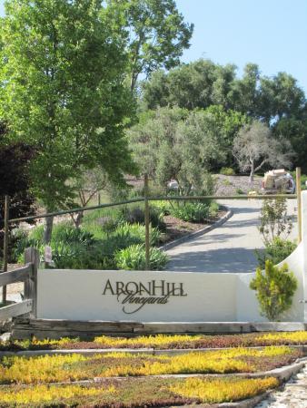 AronHill Vineyards: AronHill Driveway