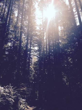 Wallace Falls State Park: Old growth forest