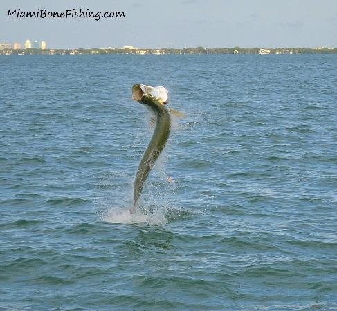 Virginia Key Beach Park Miami Bonefishing Charters Day Tours