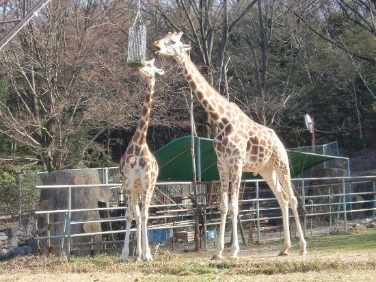 ゾウ - Picture of Higashiyama Zoo & Botanical Garden, Nagoya - TripAdvisor